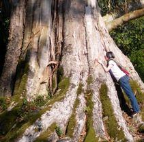 Besos de árbol. Un proyecto de  de Marthazul         - 10.04.2011
