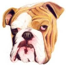 Perro. Um projeto de Ilustração de Eduardo Bertone         - 01.06.2011