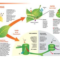 Infografía Fotosíntesis. Un proyecto de Diseño e Ilustración de Noelia Carretero Ropero         - 14.03.2012