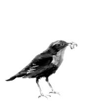 Ilustración / Sumi-e. A Illustration project by Diseño gráfico :: Maquetación  :: Ilustración - 10.12.2012