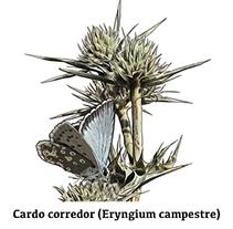 Especies del Páramo. A Illustration project by Daniel Jabato Herrero         - 04.08.2016