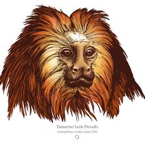 Animalia. A Illustration, and Education project by Laura Macías Álvarez         - 05.02.2017