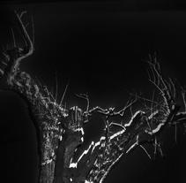 Paisajes de luz. Arbol desierto.. A Photograph project by Estela García         - 28.03.2017